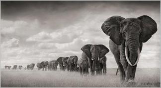 elefantes paciencia
